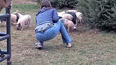 Mela talks to the piglets