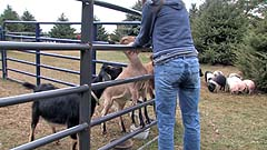 Mela pets some goats in her wet pants